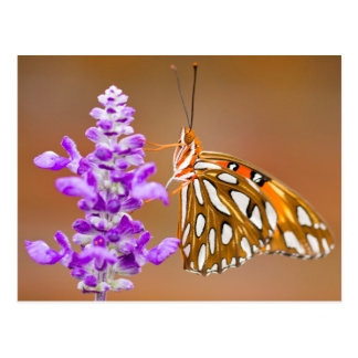Leuchtorange-Golffritillary-Schmetterling Postkarte