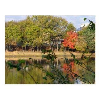Leuchtorange-Orangenbaum Postkarten