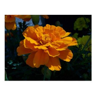 Leuchtorange-Ringelblume Postkarte