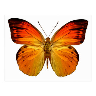 Leuchtorange-Schmetterling Postkarte
