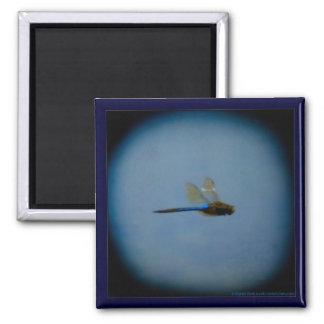 Libellen-Fotomagnet Quadratischer Magnet