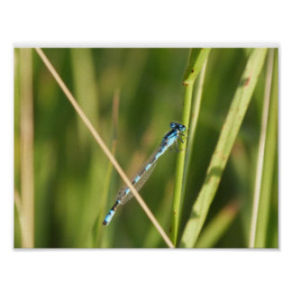 Libellen-Natur-Plakat Poster