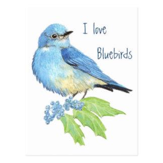 Liebe I Drosseln, Vogel-Sammlung Postkarte