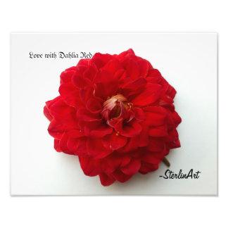 Liebe mit Dahlie-Rot Photographie