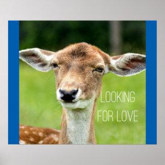 Liebe suchen - lustiges Tierplakat Poster