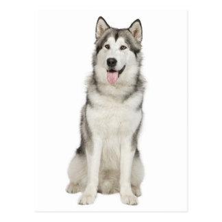 Liebealaskischer Malamute-Welpen-Hundepostkarte Postkarten