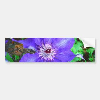 Lila Clematis-Blume Autoaufkleber