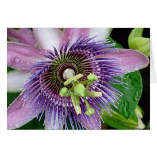 Lila Leidenschafts-Blume Karte