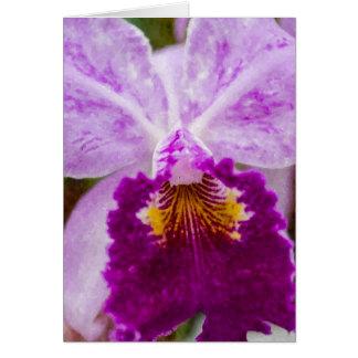 Lila Leidenschafts-Orchidee Karte