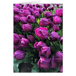 Lila Prinz Tulips Karte
