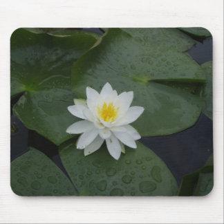 Lilien-Blume in den Lilien-Auflagen Mauspad