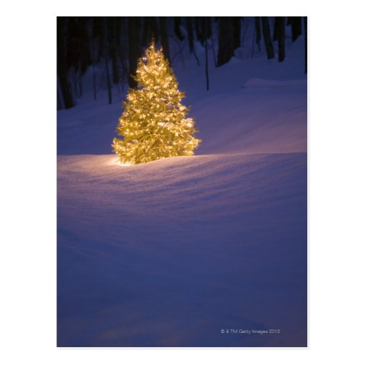 lit weihnachtsbaum drau en postkarten zazzle. Black Bedroom Furniture Sets. Home Design Ideas