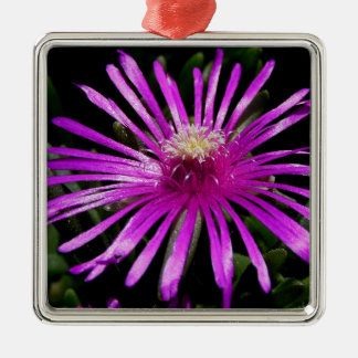 Livingston-Gänseblümchen Quadratisches Silberfarbenes Ornament