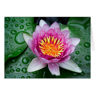 Lotos-Blume Karte