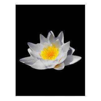 Lotos-Blume (schwarzer Hintergrund) Postkarte