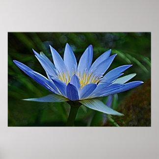 Lotos-Blume und -bedeutung Poster
