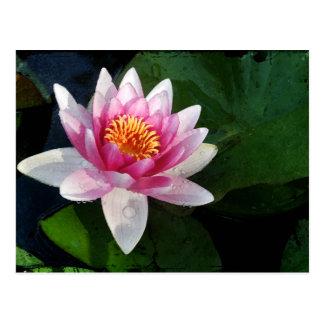 Lotus2 Postkarte