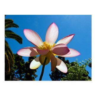 Lotusblühen Postkarte
