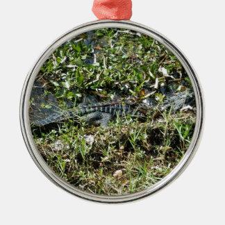 Louisiana-Sumpf-Alligator in nahem hohem Rundes Silberfarbenes Ornament