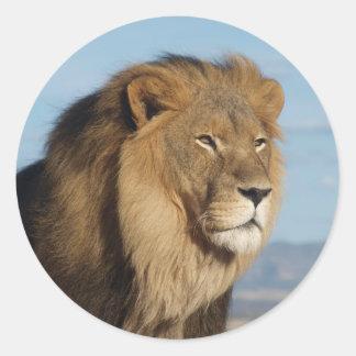Löwe Runder Aufkleber