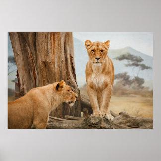 Löwen, die in einer Gebirgslandschaft stillstehen Poster