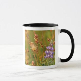 Lupine-u. Grasland-Rauch-Wildblumen in Montana Tasse