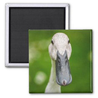 Lustige Enten-naher hoher Magnet Quadratischer Magnet