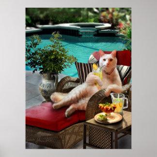 Lustige Haustier-Plakat-Katzen-Luxus-Ferien Poster