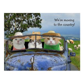 Lustige Katzen, die Postkarte bewegen