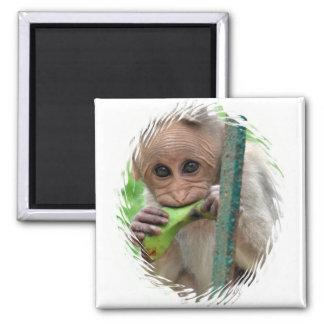 Lustiger Affe-Bild-Magnet Quadratischer Magnet