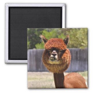Lustiger Alpaka-Magnet Quadratischer Magnet