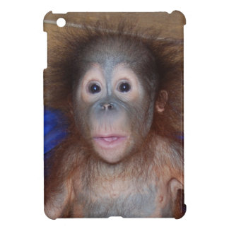 cadbury orang utans case Cadbury orang-utans case 2358 words | 10 pages introduction: cadbury as we know is a well-known company all over the world engaged in services of producing confectionery products.