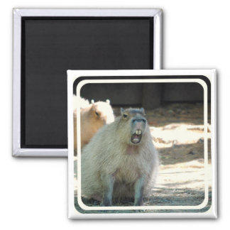 Lustiger Capybara-Magnet Quadratischer Magnet