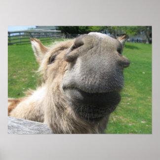Lustiger Esel-nahes hohes Poster