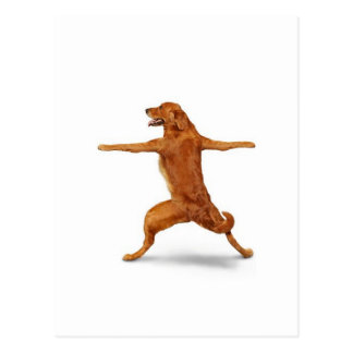 Lustiger Hund Postkarten