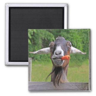 Lustiger Ziegen-Magnet Quadratischer Magnet
