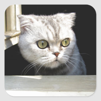 Lustiges Kätzchen Quadratischer Aufkleber