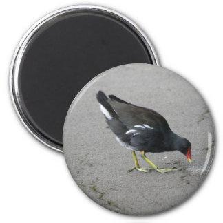 Lustiges Teichhuhn nehmen einen Bogen-Magneten Runder Magnet 5,7 Cm