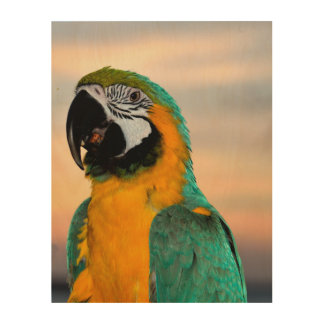 Macaw-Papagei Holzdruck