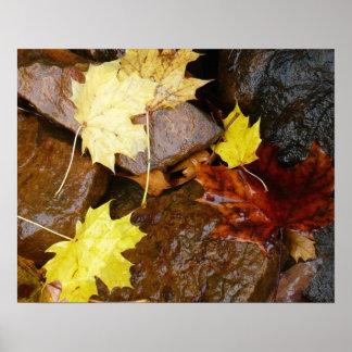 Machen Sie Blätter nass und schaukelt Herbst-Natur Poster
