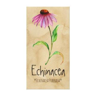 "Magischer PflanzenEchinacea 13,22"" x 25,52"" Leinwanddruck"