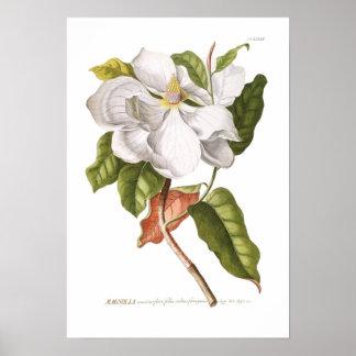 Magnolie Poster
