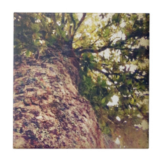 Magnolien-Baum-Produkte Keramikfliese
