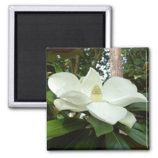 Magnolien-Grandifloramagnet Quadratischer Magnet