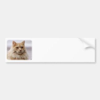 Maine-Waschbär-Katze 9Y825D-145 Autoaufkleber