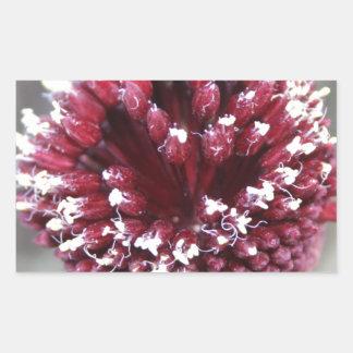 Makro des rundköpfiger Porree-Blumen-Lauchs Rechteckiger Aufkleber