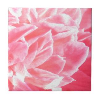 Makro rosa Blumenblumenblätter Fliese