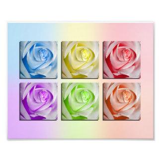 Makroregenbogen-Rosen Fotodruck