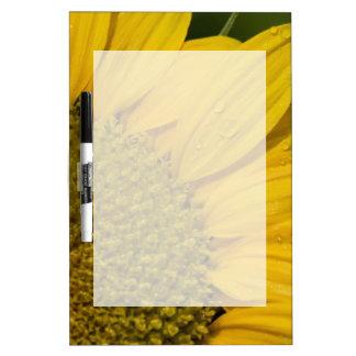 Makrosonnenblume mit Regentropfen Trockenlöschtafel