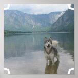 Malamute-Hundeplakat-Druck Poster